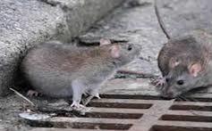 Los Char: Las Ratas de Barranquilla y de Colombia